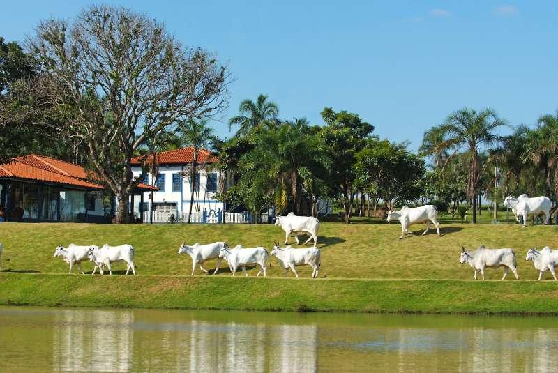 fazendas a venda mato grosso gado